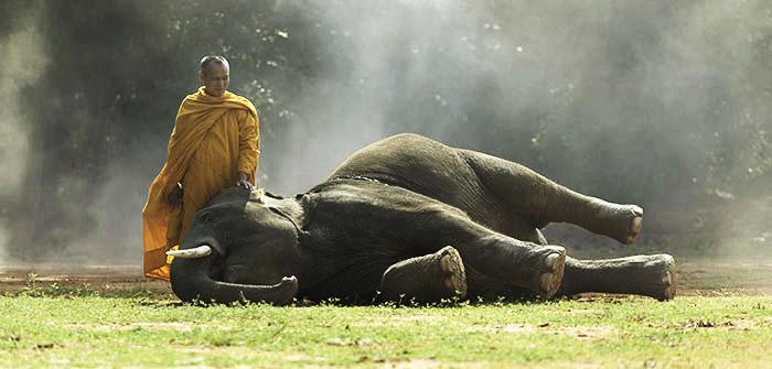 El jinete y el elefante